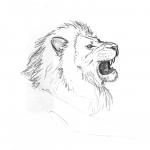 Testa di leone (Lion head)