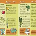 Brochure Alimos - I prodotti ortofrutticoli regionali Pagina_10_11